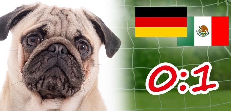 Das DER-HUND-WM-Team: Spielbericht – Deutschland-Mexiko