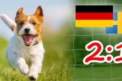 DER HUND Deutschland gegen Schweden 2:1