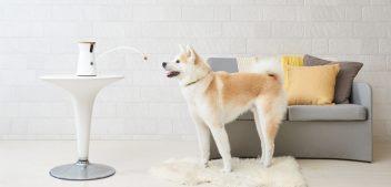 Du und dein Hund: Immer zusammen, auch wenn ihr gerade getrennt seid