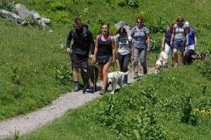 Gruppe Menschen wandert mit Hunden