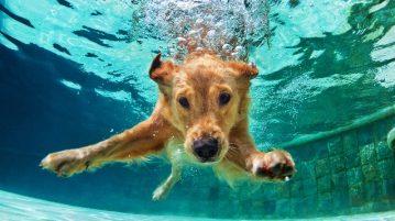Hund taucht unter Wasser