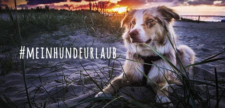 Gesucht wird das ausgefallenste Hunde-Urlaubsfoto