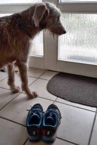Hund steht vor Haustür und möchte laufen