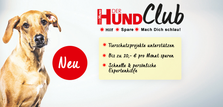 NEU → DER HUND CLUB: Hilf ✹ Spare ✹ Mach dich schlau!