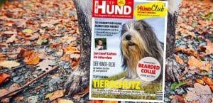 Magazin DER HUND, Cover der Ausgabe 11/18