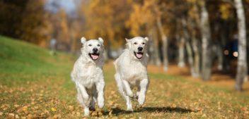 Das Immunsystem von Hunden