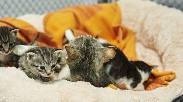 Kleine Kätzchen mit Mutter im Körbchen