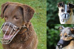 Drei Hunde mit Maulkörben