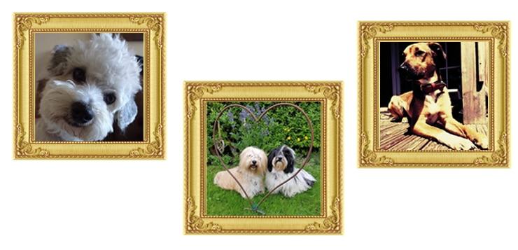 Beliebteste Fotos: Diese Hundefotos habt ihr auf den ersten Platz gewählt