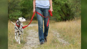 Mensch geht mit angeleintem Hund spazieren
