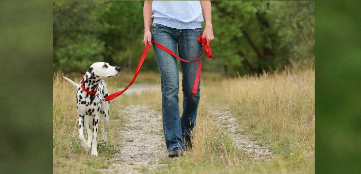 Oktober 2018: Urteil zu freilaufenden Hunden
