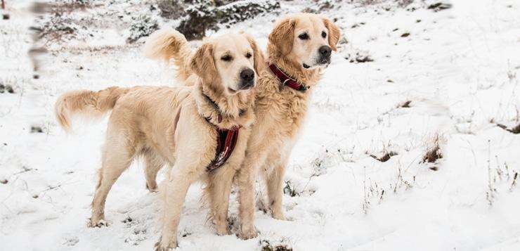 Mit diesen Tipps kommen Hunde gesund durch den Winter