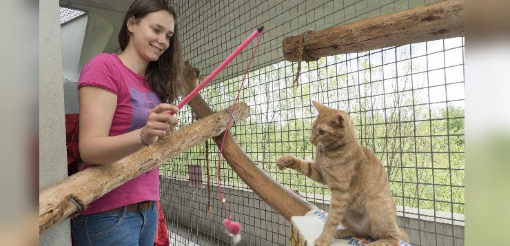 Teenager spielt mit Katze