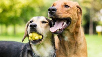 Zwei Hunde spielen gemeinsam im Park