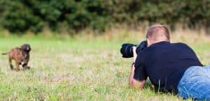 Person liegt auf Wiese und fotografiert Welpen