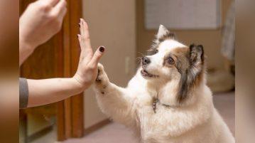 Hundetrick für Leckerli