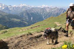 Peter Frommenwiler und Hündin Chia bei ihrer Schweiz-Wanderung.