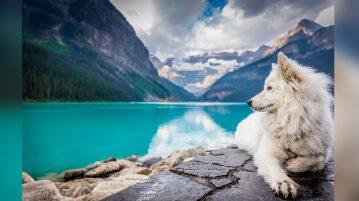 Hund liegt an Bergsee
