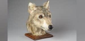 rekonstruierter Hundekopf
