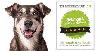 Die Top 10 der Hundeschulen 2018