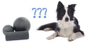 Faszienrollen und Hund