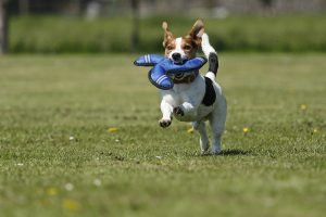 Was tun, wenn der Hund plötzlich lahmt?