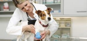 Ein Hund steht auf dem Behandlungstisch bei der Tierärztin