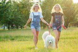 Zwillingsfrauen gehen mit Hund spazieren