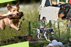 Hundesportarten - Nasenarbeit