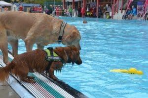 Zwei Hunde am Schwimmbecken