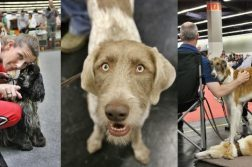 Hunde und Menschen auf der CACIB Nuernberg 2019