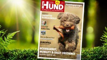 Lagotto Romagnolo, Cover DER HUND 9/19
