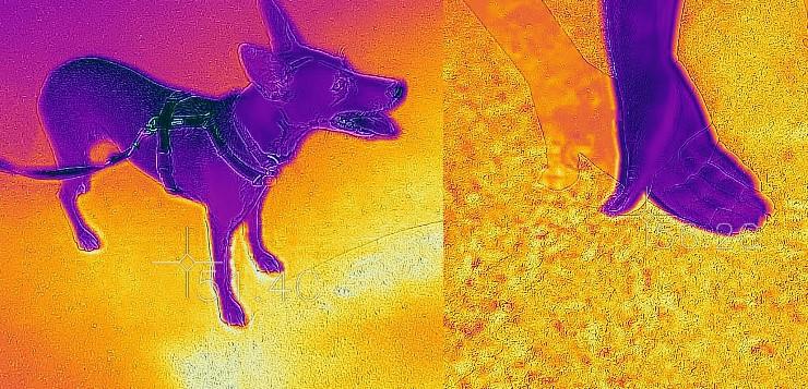 Asphalt, Hund und Hand in der Aufnahme einer Wärmebildkamera