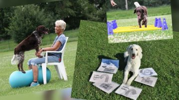 Bodenarbeit, Mobility und Rally Obedience