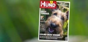 Cover der Ausgabe 10/19 von DER HUND