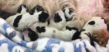 Puppy Diaries 2 – die Entwicklungsphasen des Hundes