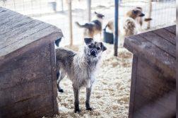 Der Tierschutz-Shop sammelt Futterspenden für Hunde in Rumänien.