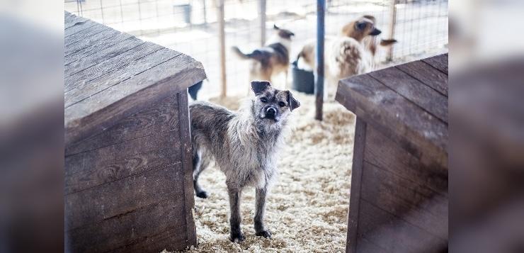 Futterspenden-Aktion für rumänische Straßenhunde