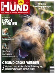 Cover der Ausgabe 10/19 von DER HUND, ein Irish Terrier schaut von unten hoch in die Kamera