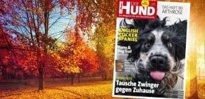 Ausgabe 11/19 von DER HUND, auf dem Cover: Cocker Spaniel Narcos