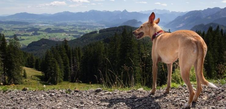 Im Herbst mit dem Hund unterwegs