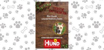 Was Hunde unwiderstehlich finden: Tierische Empfehlungen