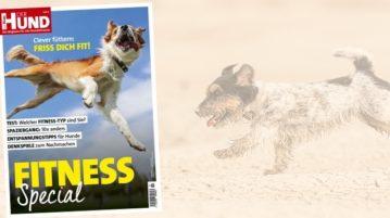Das Cover des DER HUND Fitness Specials