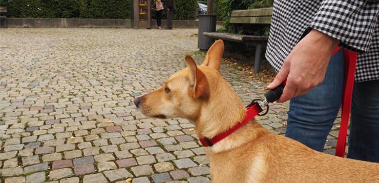 VERLOSUNG – Goleygo by Kerbl – Click und dran!