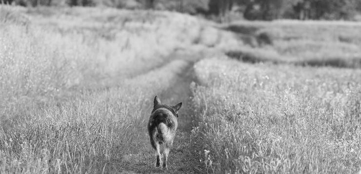 Jäger erschoss Hunde: Urteil gefallen