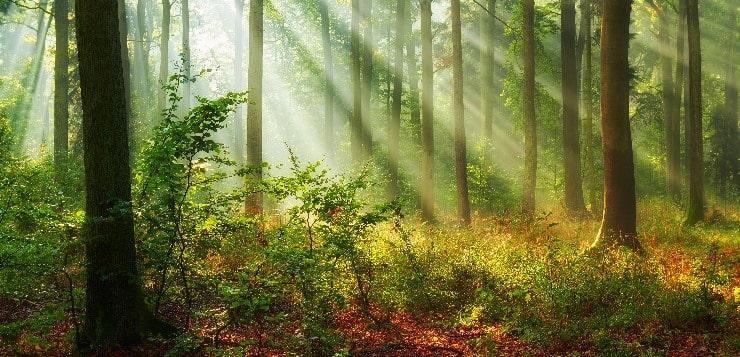 friedlicher Wald im Sonnenschein