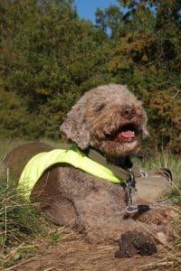 Trueffelsuchhund
