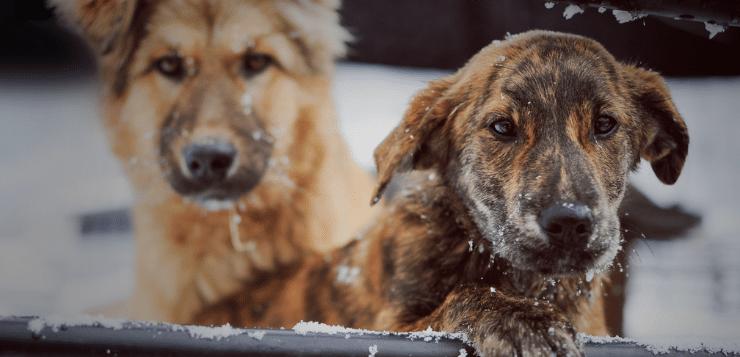 Los geht's: Der Spenden-Marathon für Tiere startet!