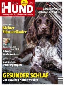 Das Cover der Ausgabe 1/20 von DER HUND zeigt einen liegenden Kleinen Münsterländer