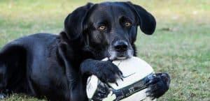 Spielen gehört zum Leben der Hunde genauso wie zum Leben der Menschen dazu.